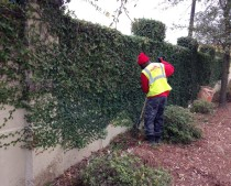 Leaf clean up service in Savannah, GA