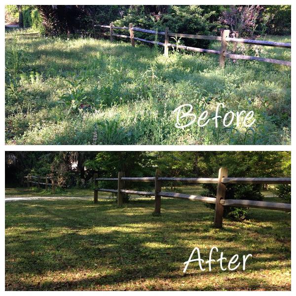 Savannah Ga Lawn Care Service Project Gallery