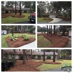 Long needle pine straw in Savannah, GA