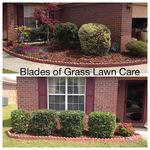 Hedge trimming Savannah, GA