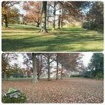 Leaf clean up services in Savannah GA