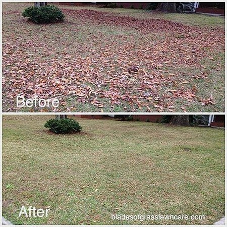 Savannah GA leaf clean up and removal services