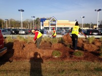 pine straw and mulch service in Savannah, GA