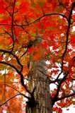 Spring & fall leaf clean up services Savannah, GA