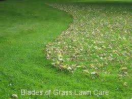 leaf removal service in Savannah, GA